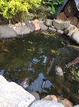 Pond water detail